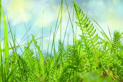 Green grass close-up on blue sky background, summer landscape royalty free stock photography