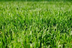 Green grass close-up. Freshly cut lawn field shot with selective focus.  Stock Photos
