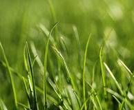 Green grass close-up growth concept Royalty Free Stock Photo