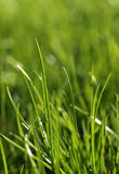 Green grass close-up growth concept Stock Photo