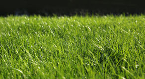 Green grass close-up growth concept Stock Images