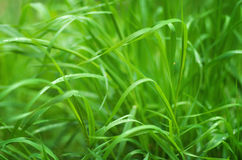 Green grass close up nature Stock Photography