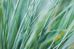 Green Grass Close-up Photo Royalty Free Stock Image