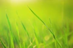 Green grass Stock Image