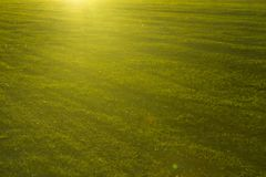 Green grass close-up in sunset. Summer or spring meadow.  Stock Photography