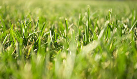 Green grass close view Royalty Free Stock Photos