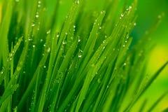 Green grass closeup Stock Photos