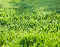 Green grass closeup Stock Photo