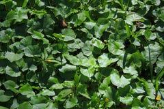 Green grass closeup Stock Photography