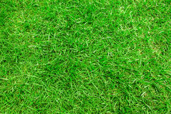 Green grass  closeup for  background Royalty Free Stock Photo
