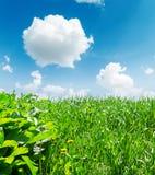 Green grass closeup and deep blue sky Stock Photography