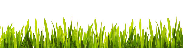 Green grass closeup Stock Images