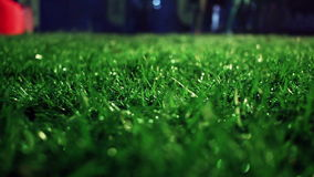 Green grass. Closeup. Lawn close up. Grass background. Green grass soccer field. Trimmed grass on meadow at night. Panning on grass field at park. Green stock footage
