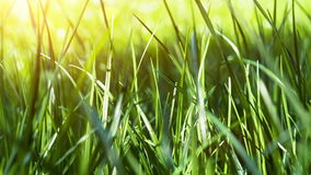 Green grass closeup. Nature background. Slider shot stock video footage