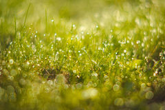 Green grass closeup Stock Image