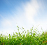 Green grass closeup with sky on background Royalty Free Stock Image