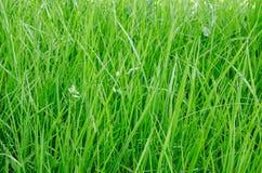 Green grass. Closeup texture background stock photos
