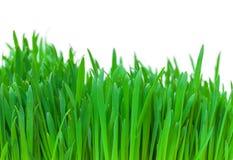 Green grass closeup Royalty Free Stock Photos