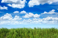 Green grass in cloud blue sky Stock Photography
