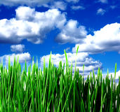 Green grass and clouds. On blue sky Stock Photo