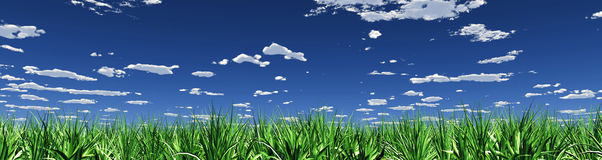 Green grass and cloudscape Royalty Free Stock Images
