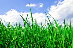 Green grass and cloudy sky Stock Images