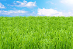 Green grass and cloudy sky Royalty Free Stock Photos