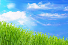 Green grass and cloudy sky. Spring nature background, green grass and cloudy sky Royalty Free Stock Photography