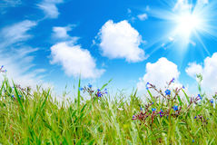 Green grass with cloudy sky Stock Photo