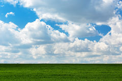 Green grass and and cloudy sky Royalty Free Stock Image