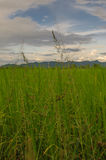 Green grass and cloudy sky. Green meadow in the evening Stock Photos