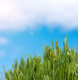 Green grass  and cloudy sky. Spring Summer background Royalty Free Stock Photography