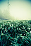 Green grass coated with first ground frost in autumn. Winter is coming on meadow. Full of frost Royalty Free Stock Image