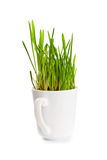 Green grass in coffee cup Stock Images