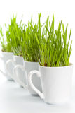 Green grass in coffee cups Royalty Free Stock Image