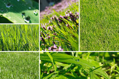 Green grass collage royalty free stock images
