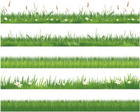 Green grass collection Royalty Free Stock Images
