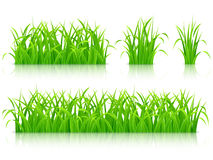 Green grass. Collection of fresh green grass Stock Photography