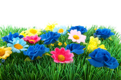 Green grass with colorful flowers Stock Image