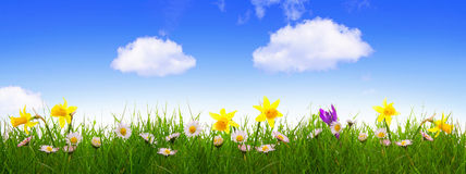 Green grass and colorful spring flowers. Stock Photo