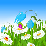 Green grass and colorful spring flowers. Stock Photography