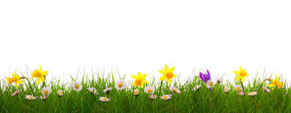 Green grass and colorful spring flowers. Royalty Free Stock Photo