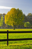 Green grass and colorful tree surrounded by a wooden fence on a golf course at Ada river island in Belgrade. Serbia Royalty Free Stock Image