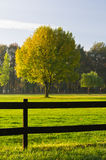 Green grass, a colorful tree and a wooden fence Stock Photography