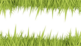 Green grass concept card Royalty Free Stock Photo