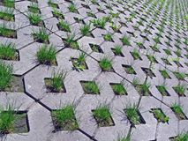 Green grass on concrete wall, Royalty Free Stock Photography