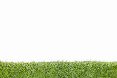 Green grass with copy space, isolated with clipping paths. Royalty Free Stock Photography