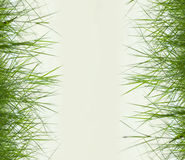 Green grass with copy space,material for designer Royalty Free Stock Photography