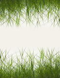 Green grass with copy space,material for designer Royalty Free Stock Image