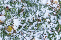 Green grass covered in autumn fallen leaves under light snow Royalty Free Stock Photos